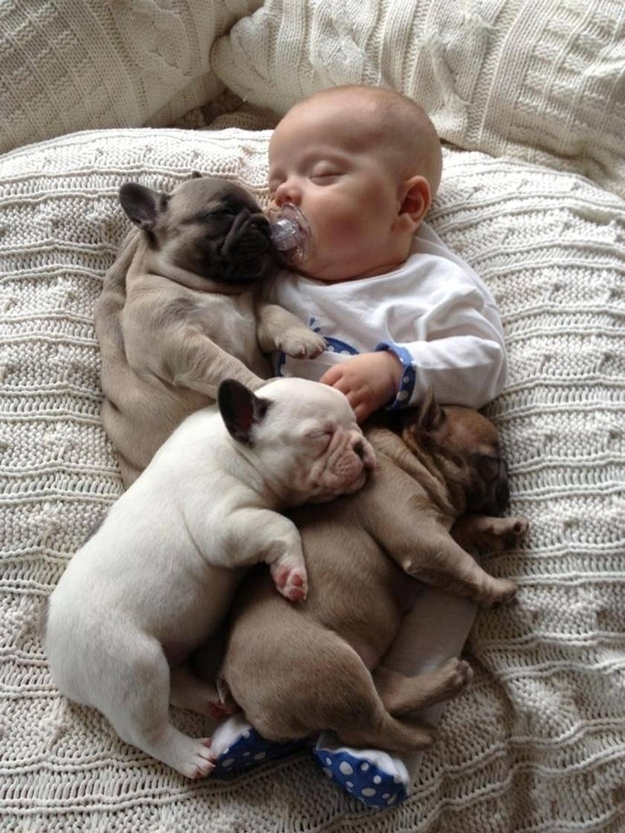 57328-baby-sleeping-with-french-bull-ywox