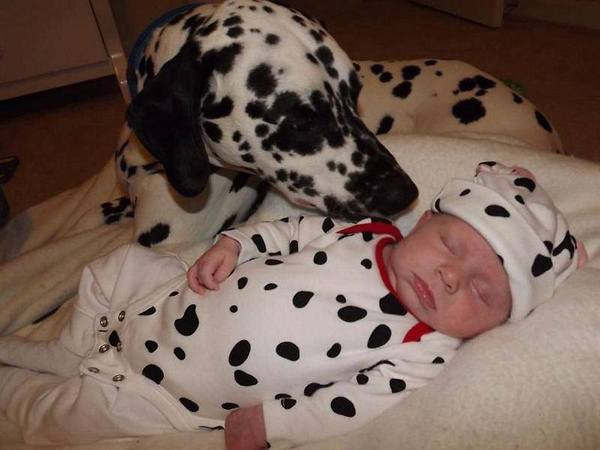 a.baa-Cute-sleeping-dog-and-baby
