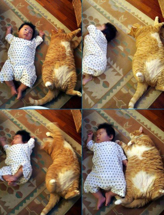 cat-baby-sleeping