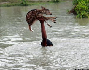 Boy Saves Drowning Baby Deer