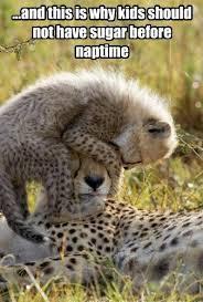 sugar naptime