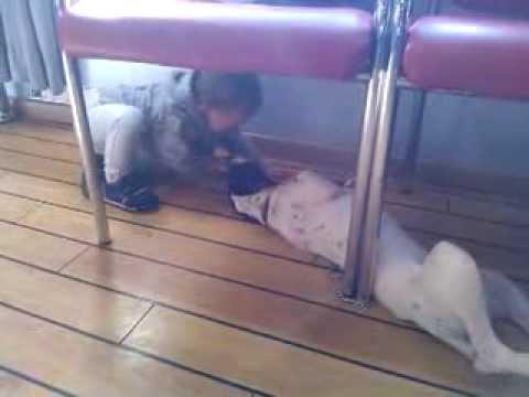 Μωρά, Παιδιά, Σκυλιά