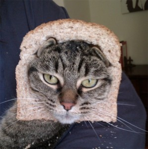 Crazy-Cat-Breading-11