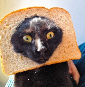 Crazy-Cat-Breading-17