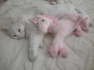 cat unicorn cute sleeping