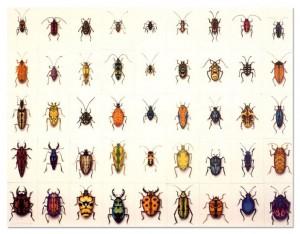bugs_200026