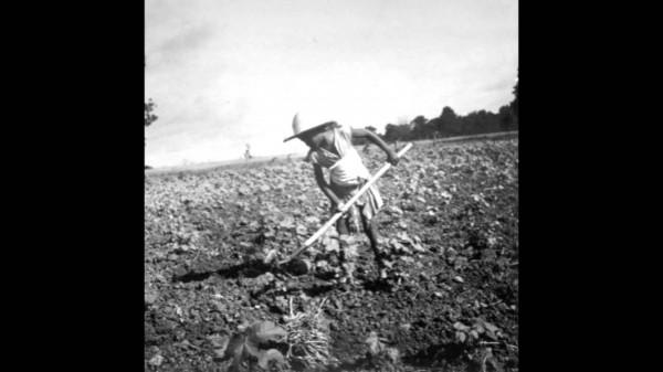 Grant Lazlo – Cotton Fields (Summertime)