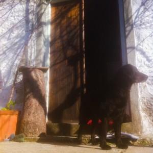 wooden door black cocker
