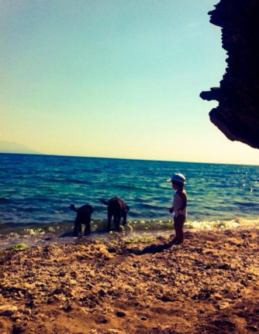 παιδί παραλία θάλασσα με σκυλιά