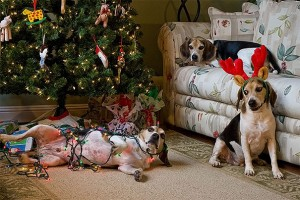 XX-animals-destroying-Christmas-13__605