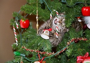 XX-animals-destroying-Christmas-16__605