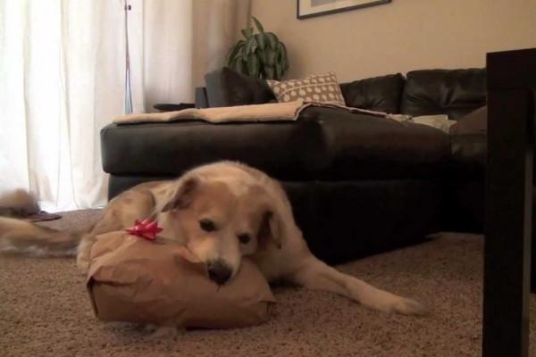 Αυτός ο Σκύλος Είναι το Χριστουγεννιάτικο Ίνδαλμά μου :)