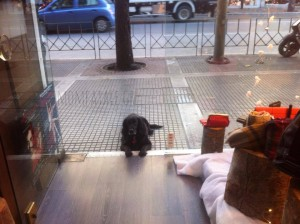 black dog waiting