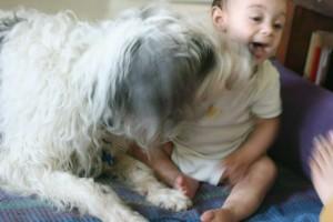 Θαυμάσιος σκύλος που αγαπάμε και ΣΕ ΚΑΜΙΑ ΠΕΡΙΠΤΩΣΗ Ο ΣΚΥΛΟΣ ΤΗΣ ΙΣΤΟΡΙΑΣ!!!