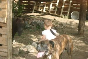 momfatale.gr boxer dog, baby, shetland pony