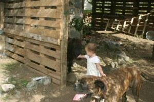 momfatale.gr shetland pony, boxer dog, baby