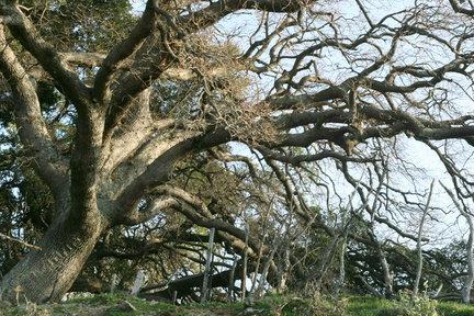 beautiful big fall tree δέντρο φθινόπωρο σαμοθράκη samothraki