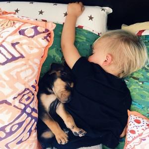 baby dog 2