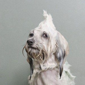 Sophie-Gamand-Wet-Dogs-1