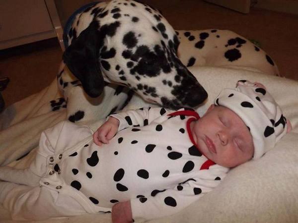 a.baa-Cute-sleeping-dog-and-baby