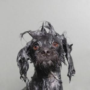 wet-dog-3