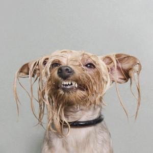 wet-dog-4
