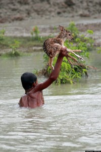 Boy Saves Drowning Baby Deer