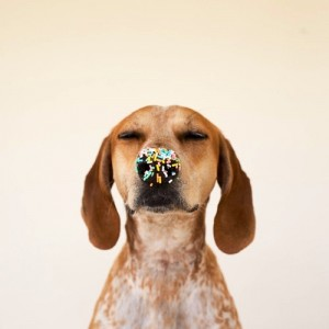 dog with sprinkles on his nose