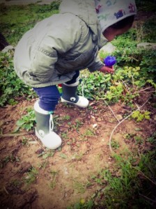 purple anemone on momfatale.gr