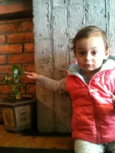 baby bonsai
