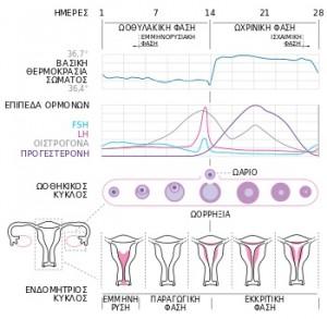 ορμονικός κύκλος