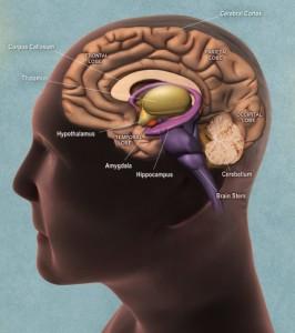 εγκέφαλος και υποθάλαμος