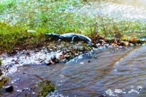 krokodeilos-rethymno-116071