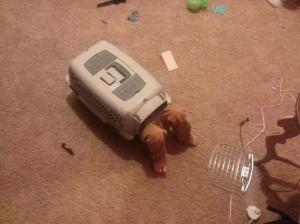 kids-act-like-animals-cat-house__605