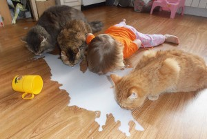 kids-act-like-animals-cats__605